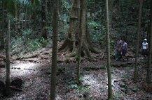 rainforest-circuit-mt-glorious